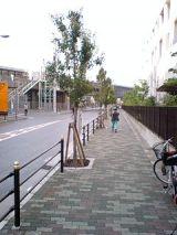 25363-2.jpg
